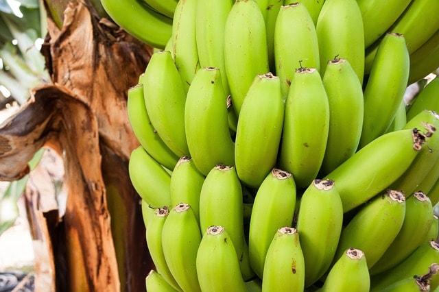 Bananes_chlordécone